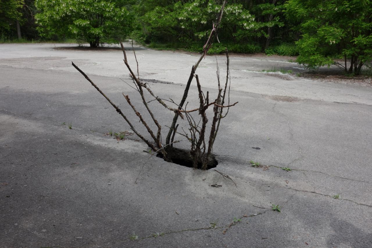 Czarnobyl wycieczka, Przyroda daje o sobie znać, Prypeć.