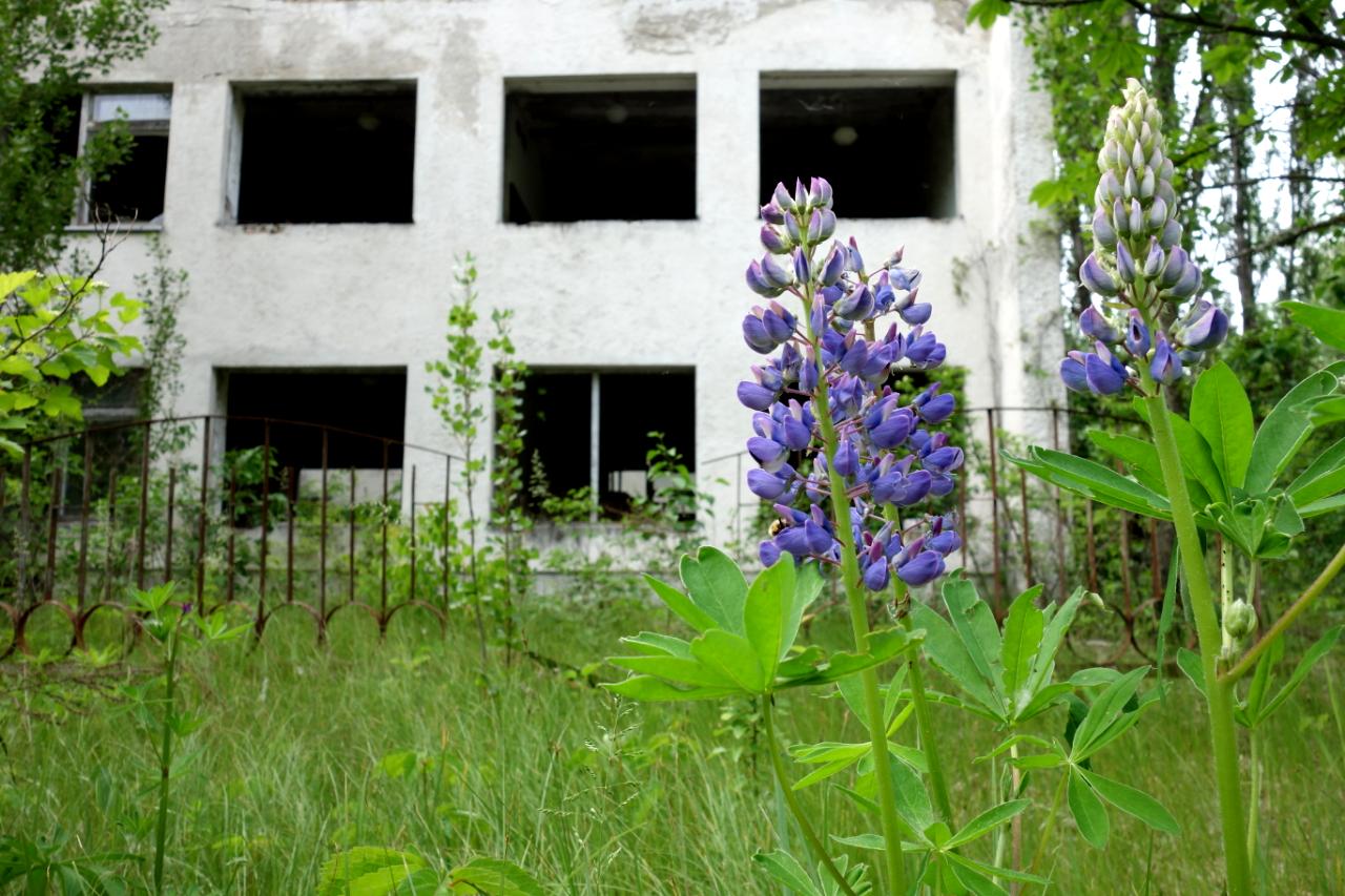 Opuszczone budynki mieszkalne w mieście Prypeć.