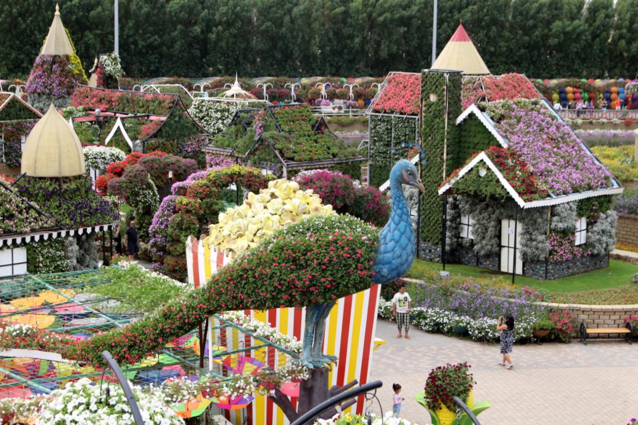 Dubaj Magiczne ogrodu - Dubai Miracle Garden.