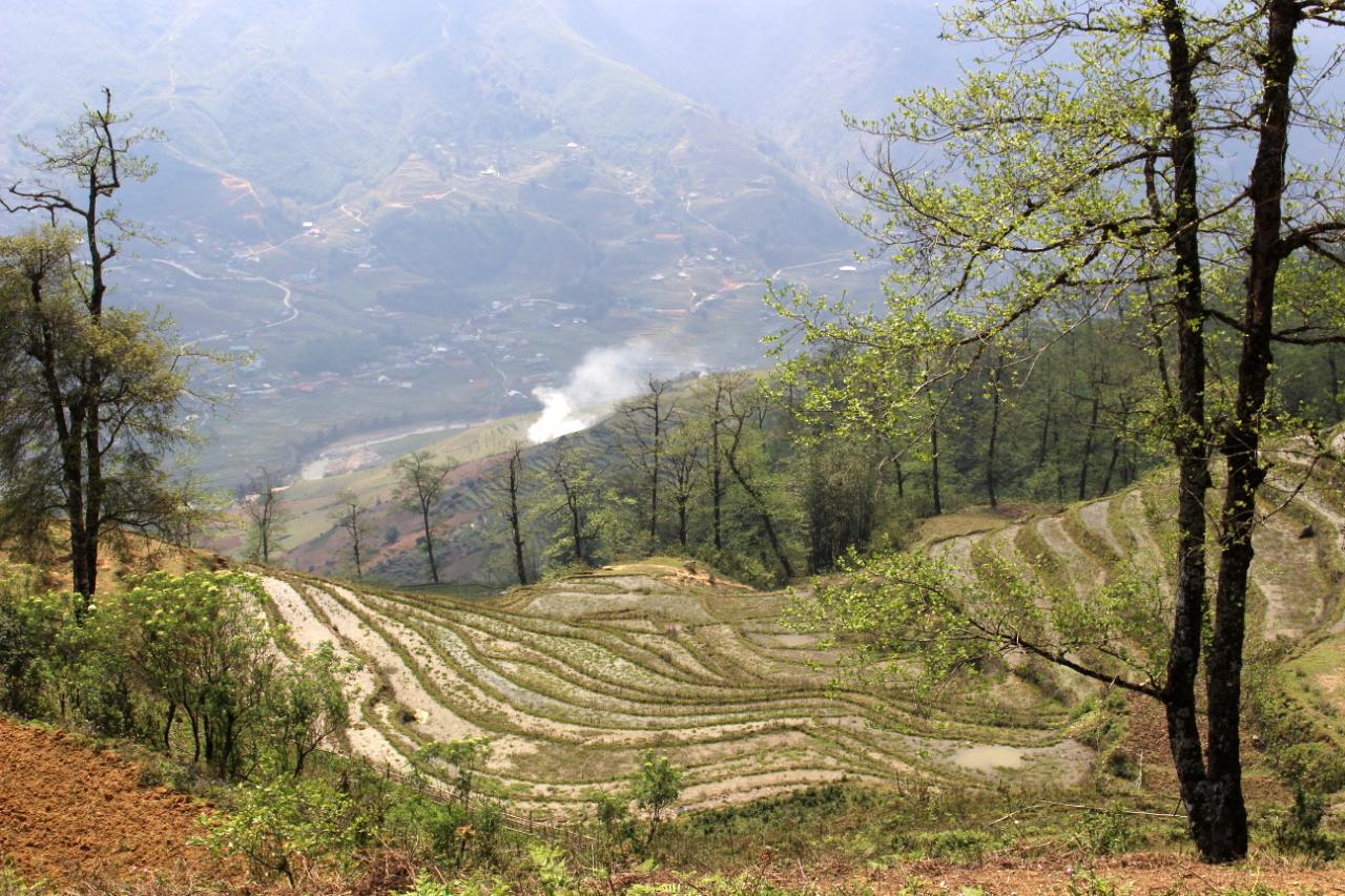 Pola ryżowe w marcu, jeszcze przed kiełkowanie ryżu. Wietnam północy, okolice Sapa.