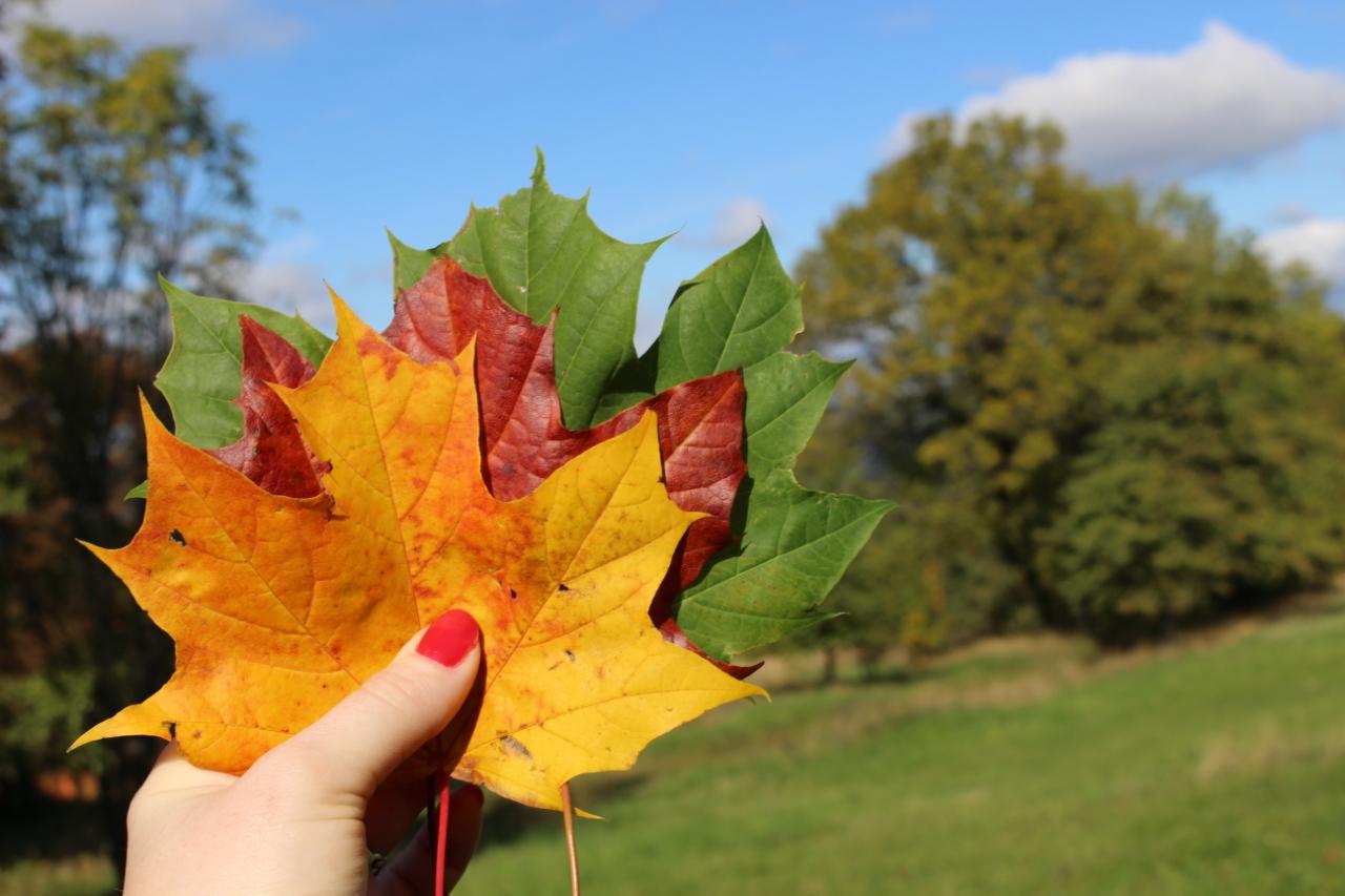 Wszystkie kolory jesieni.