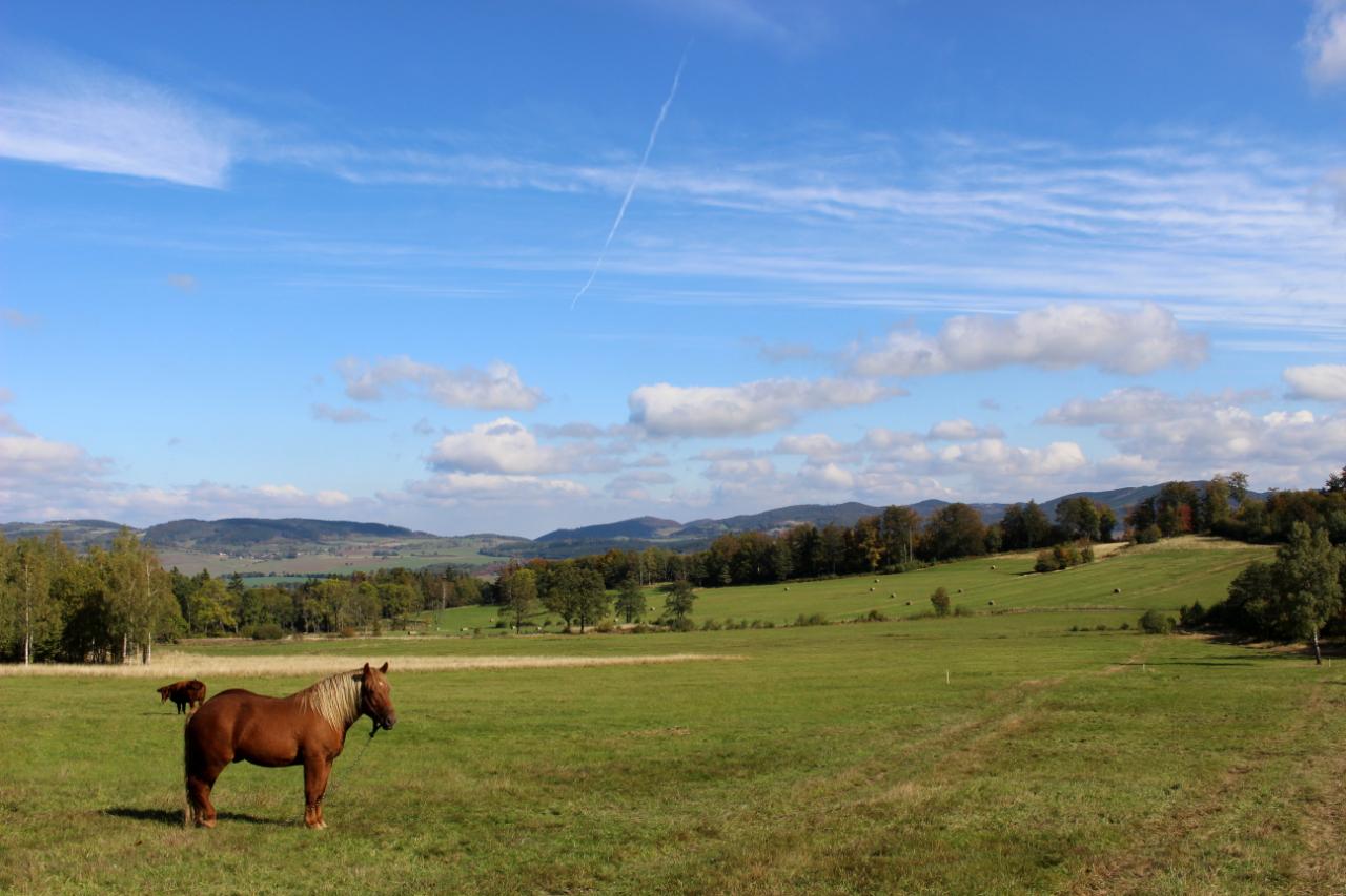 Pasące się konie w drodze na kolorowe jeziorka