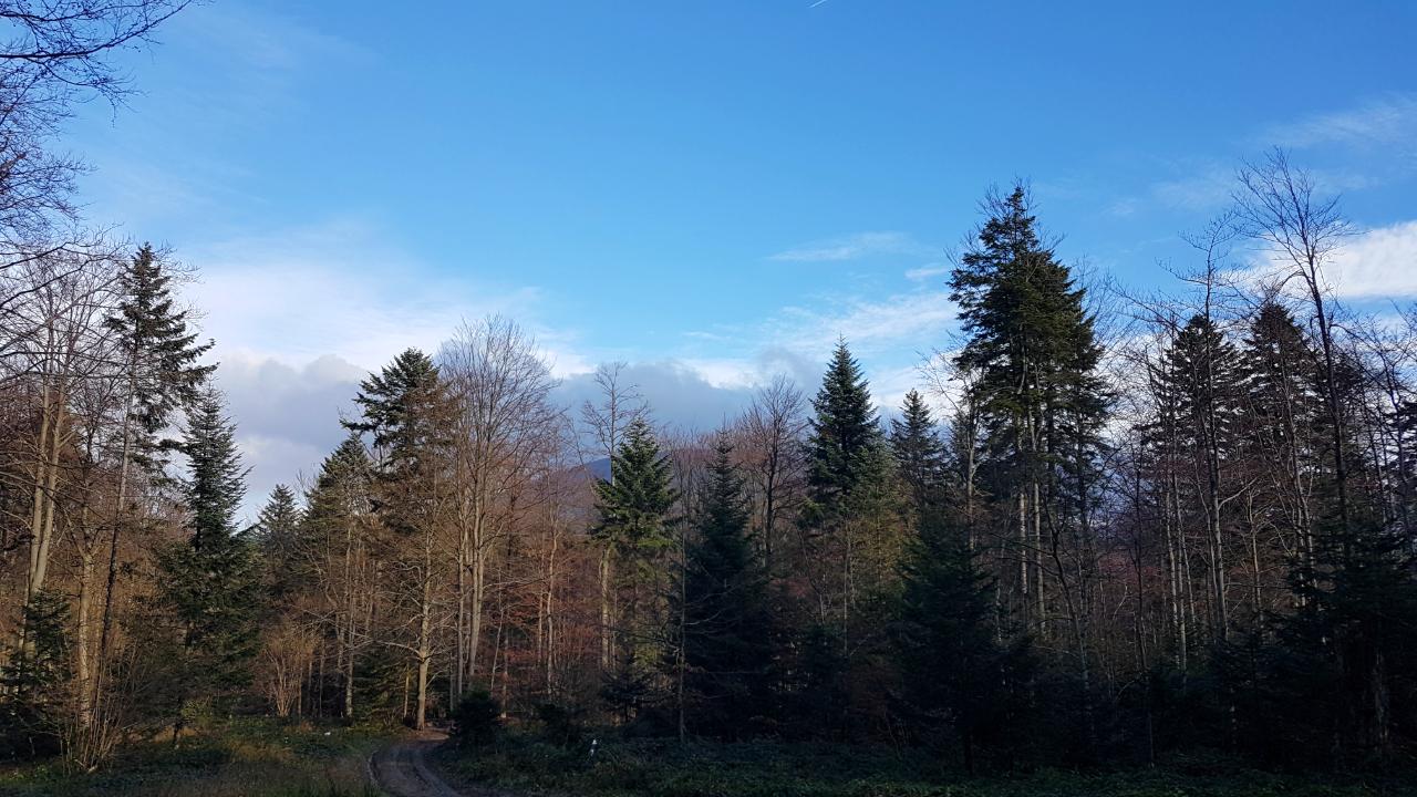 Widok z oddali na Lackową - Beskid Niski.
