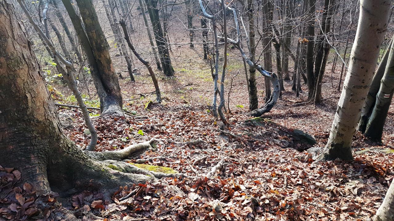 Beskid Niski - podejście na Lackową.
