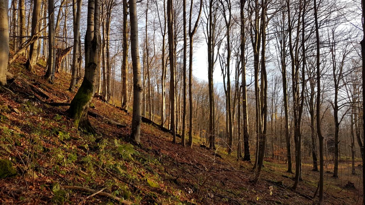 Zejście z Lackowej - Beskid Niski.