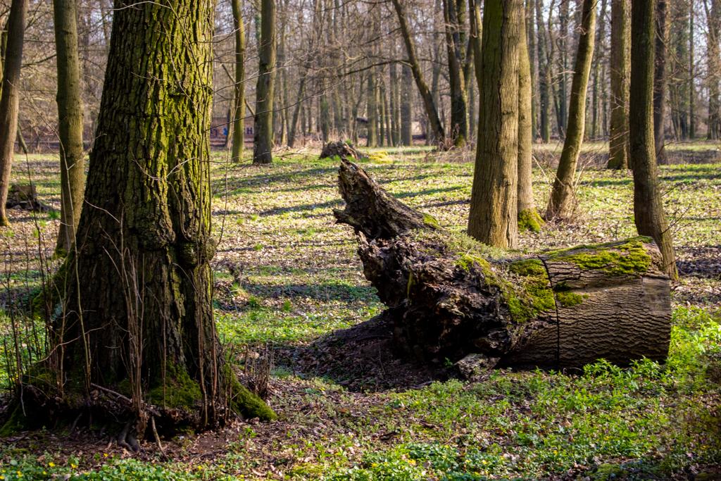 Park pałacowy, Owińska 2020 r.