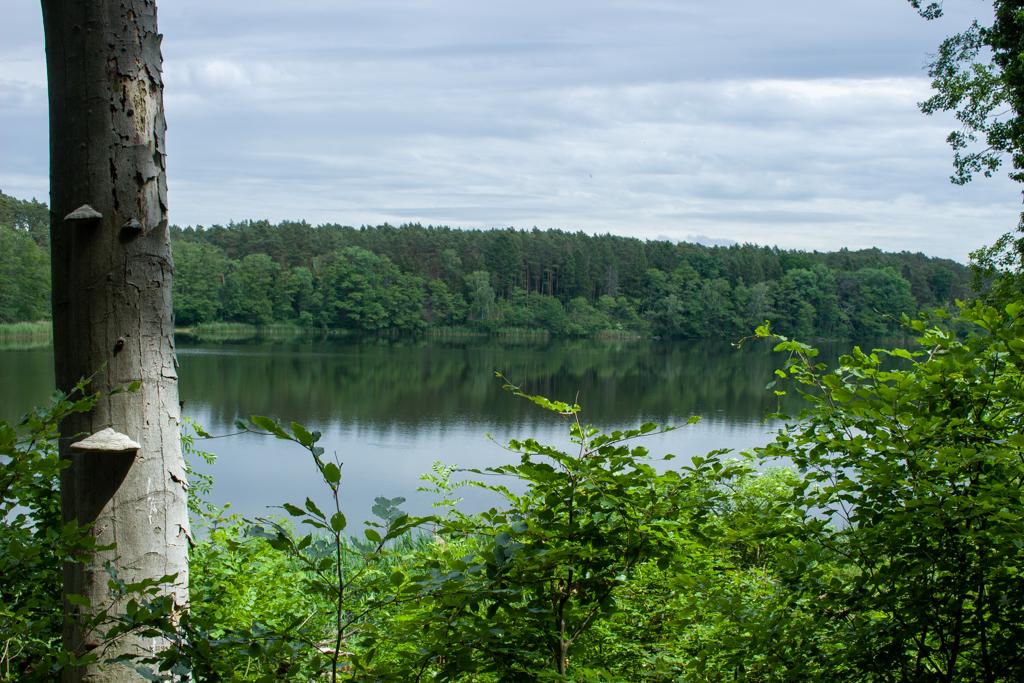 Rezerwat Buki nad Jeziorem Lutomskim, Sieraków