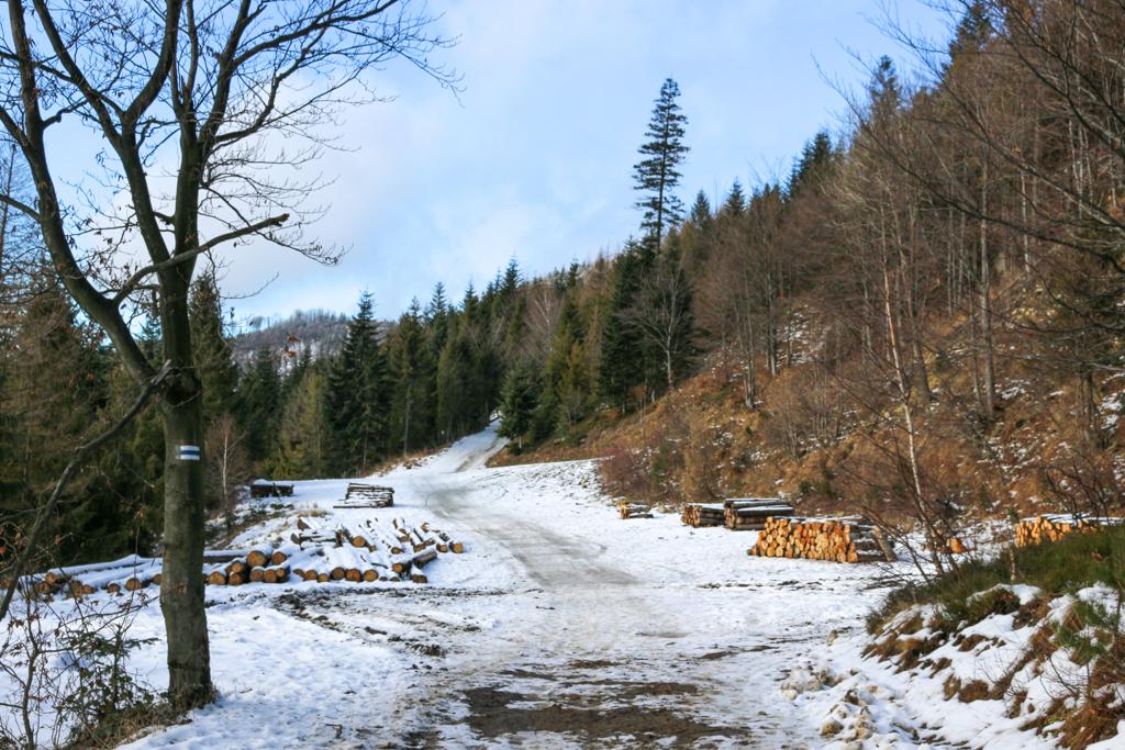 """Niebieski szlak prowadzący na Klimczok. Tuż przed rozwidleniem """"Na Pięciu Drogach""""."""